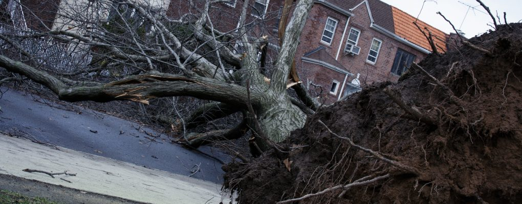 Fallen tree after a severe storm in Brooklyn.